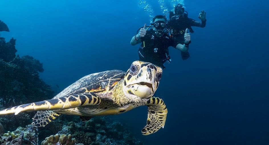 Niyama_Maldives_Turtle_Quest_944x510