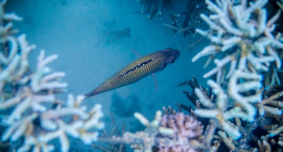 Niyama_Maldives_Snorkelling Trips_944X510